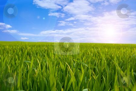 Green Field stock photo, Beautiful green field o a clear summer day. by Bagiuiani Kostas