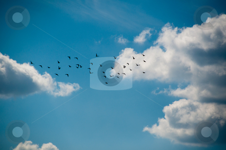 Flock of birds stock photo, Flock of birds in beautiful cloudy summer sky by Frank G?