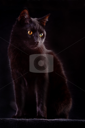 Black cat stock photo, black cat domestic animal with beautiful eyes concept for animal friendship or spooky horror halloween bad luck by Dirk Ercken