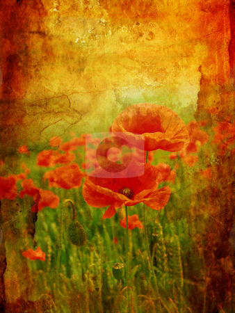 Beautiful vintage background with poppies stock photo, Beautiful vintage background with poppies by Juliet Photography