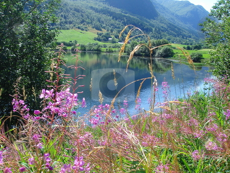 Norwegian fjords stock photo, beautiful lanscapes from norwegian fjords  in the summer - europe travel by Stelian Ion