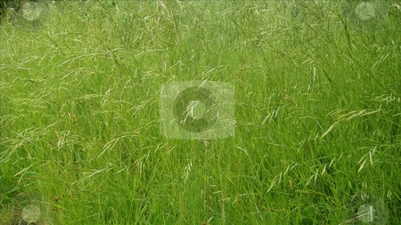 GreenGrass Texture stock photo, Green Grass Texture Pattern - meadow by Stelian Ion