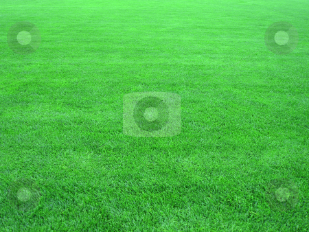 Fresh green grass - texture stock photo, fresh green grass - texture background by Stelian Ion