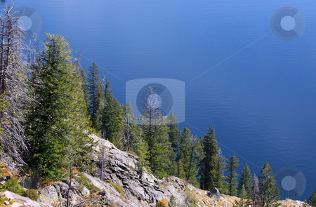 Pine trees on a hill stock photo, Pine trees on a hill by Jackson lake in Wyoming by Sreedhar Yedlapati