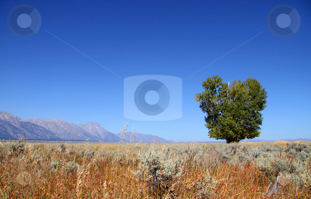 Single tree stock photo, Green single tree in the meadow in autumn time by Sreedhar Yedlapati