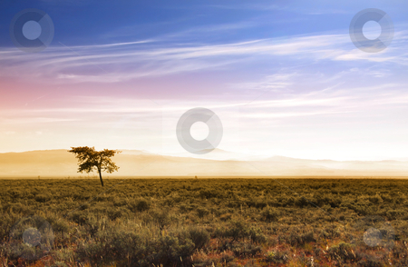 Beautiful morning scene in prairies stock photo, Single tree in Prairies in Wyoming with sun rise by Sreedhar Yedlapati