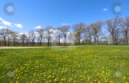 Scenic spring landscape stock photo, Spring landscape green field ,dandelions and blue sky  by Sreedhar Yedlapati