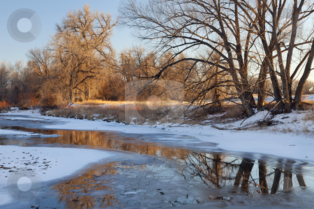 Winter river stock photo, partially frozen Cache la Poudre River with cottonwood trees at Fort Collins, Colorado by Marek Uliasz