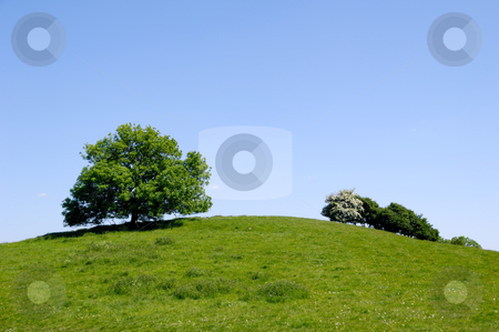 Tree on top of hill stock photo, A tree on top of a hill with blue sky. by Lars Christensen