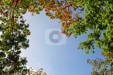 Tree tops stock photo, Prespective of tree tops in the beginning of Autumn by Neonn