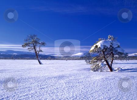 Beautiful winter landscape of snowy trees stock photo, Beautiful winter landscape of snowy trees in sunshine  by Ingvar Bjork