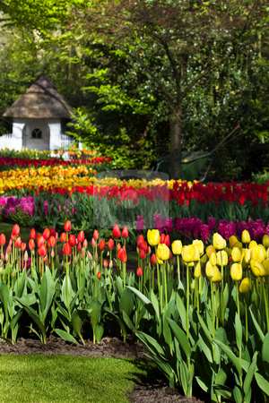 Spring garden with colorful tulips stock photo, Spring garden with colorful tulips in yellow and red by Colette Planken-Kooij