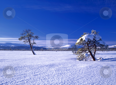 Beautiful winter landscape of snowy trees stock photo, Beautiful winter landscape of snowy trees in sunshine  by Ingvar Bjork