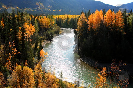 Autumn colors along Northern British Columbia river stock photo, Autumn colors along Northern British Columbia river by Mark Duffy