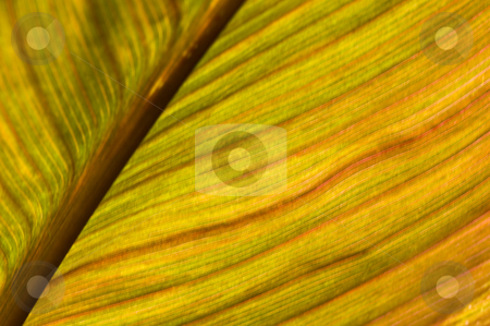 Macro of a leaf stock photo, macro of a leaf with shallow dof by Juliane Jacobs
