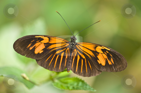 Butterfly stock photo, closeup of a butterfly resting on a flower by Juliane Jacobs