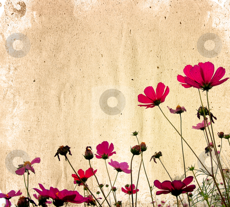 Vintage paper floral stock photo, old shabby paper textures - perfect background with space for text or image  by ilolab