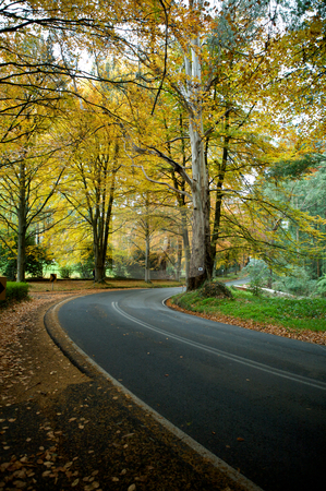 Autumn Colours stock photo, Autumn colours on the leaves with a curved road through the Forrest  by Vividrange