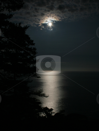 Moonlight on the Atlantic stock photo, A sparse spruce silhouetted against the moonlit ocean at Acadia National Park, in Maine USA.  by Chris Hill