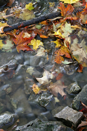 Fall Leaves in a Stream stock photo, A closeup of a stream in autumn with lots of fallen leaves.  The shot was taken with a slow shutterspeed to  give the water it's milky look.  by Chris Hill