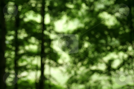 Defocused Forest stock photo, A Defocused Forest cast in bright background light. by Chris Hill