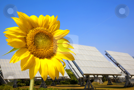 Beautiful sunflower and solar panel and power plant.Alternative energy concept  stock photo, Beautiful sunflower and solar panel and power plant.Alternative energy concept  by tomwang