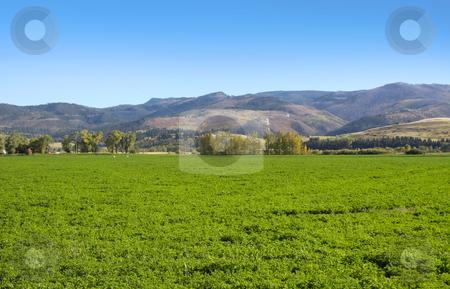 Farm scene stock photo, Lush green farm in the Montana USA by Sreedhar Yedlapati