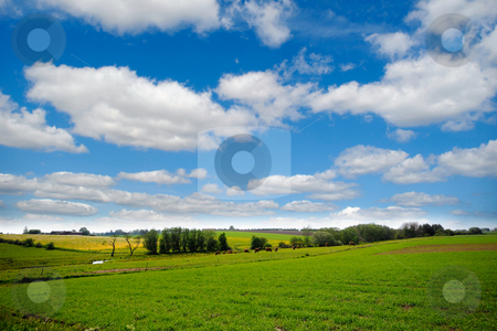 Farmland with blue and cloudy sky stock photo, Idylic farmlandscap with green fields, cows and blue cloudy sky. by Lars Christensen