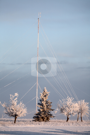 Frost covered trees and tower stock photo, Frost covered trees and tower by Mark Duffy