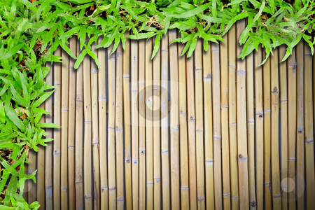 Green grass on bamboo background stock photo, green grass on bamboo background by rufous