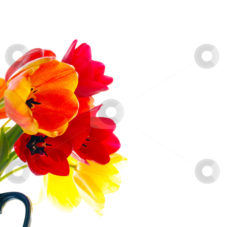 Fresh tulips stock photo, bouquet of fresh tulips by sutike