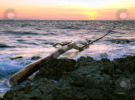 Sea debris stock photo, Tree trunk as debris on the rocky coast of the Adriatic Sea by Sinisa Botas