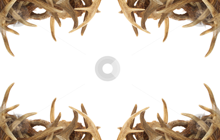 Deer Antler Border stock photo, A background / border with whitetail deer antlers dressing the corners by David Schliepp