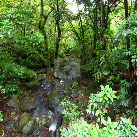El Yunque National Forest stock photo, View of the famous El Yunque Rainforest of Puerto Rico. by Jason Ross