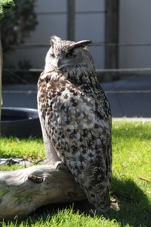 Owl in zoo stock photo, Photo of an owl in the zoo by Olena Pupirina