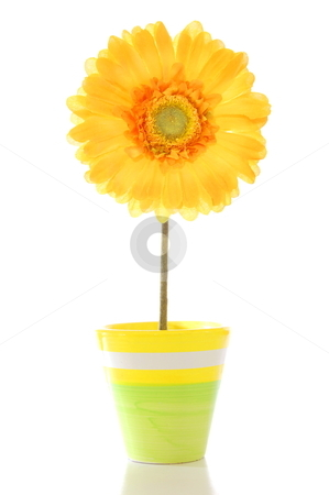 Flower in pot stock photo, beautyful summer flower in pot with copyspace                                     by Gunnar Pippel