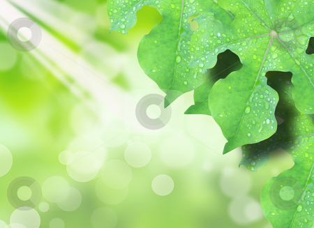 Green leaf and sun stock photo, Green leaf and sun by rufous