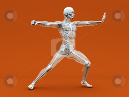 Anatomy -  Martial Arts stock photo, A medical visualisation of human anatomy. 3D rendered Illustration. by Michael Osterrieder