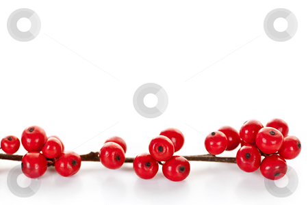 Red Christmas berries stock photo, One winterberry Christmas branch with red holly berries by Elena Elisseeva