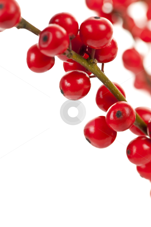 Red Christmas berries stock photo, Winterberry Christmas branches with red holly berries by Elena Elisseeva
