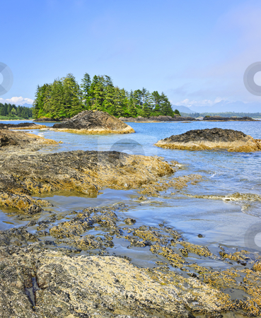 Coast of Pacific ocean, Vancouver Island, Canada stock photo, Rocky ocean shore in Pacific Rim National park, Canada by Elena Elisseeva