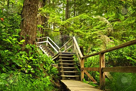 Path in temperate rainforest stock photo, Path through temperate rain forest. Pacific Rim National Park, British Columbia Canada by Elena Elisseeva