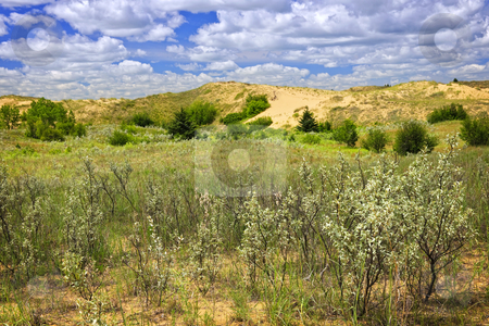 Sand dunes in Manitoba stock photo, Landscape of Spirit Sands dunes in Spruce Woods Provincial Park, Manitoba, Canada by Elena Elisseeva