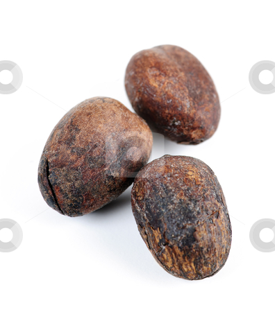 Shea nuts stock photo, Raw unprocessed shea nuts isolated on white background by Elena Elisseeva