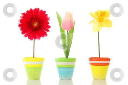 Funny flowers stock photo, funny summer flowers isolated on white background                                     by Gunnar Pippel