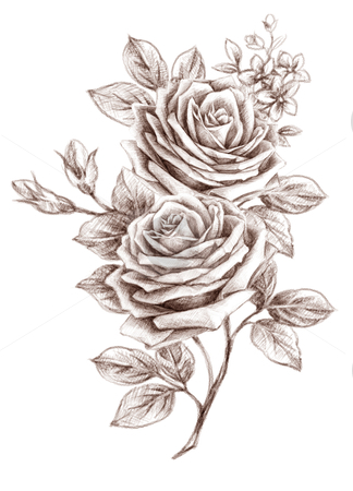 Freehand drawing rose 01 stock photo, Old-styled rose. Freehand drawing by Tang Shu-chuan