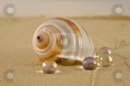 Beach stock photo, Beach Shell by Vividrange