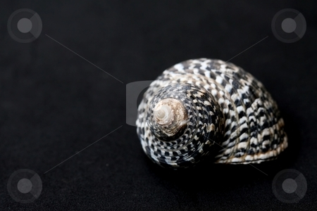 SeaShell stock photo, A conical, black and white seashell by Karma Shuford