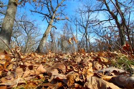 Forest Scene - Illinois stock photo, A sunlit forest at Colored Sands Forest Preserve in Illinois. by Jason Ross