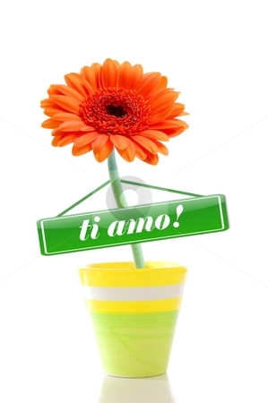 I love you flower stock photo, i love you flower isolated on white greeting card by Gunnar Pippel